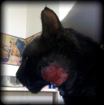 Sparky has a 2 cm by 2 cm red spot on the side of his face where there is no skin!