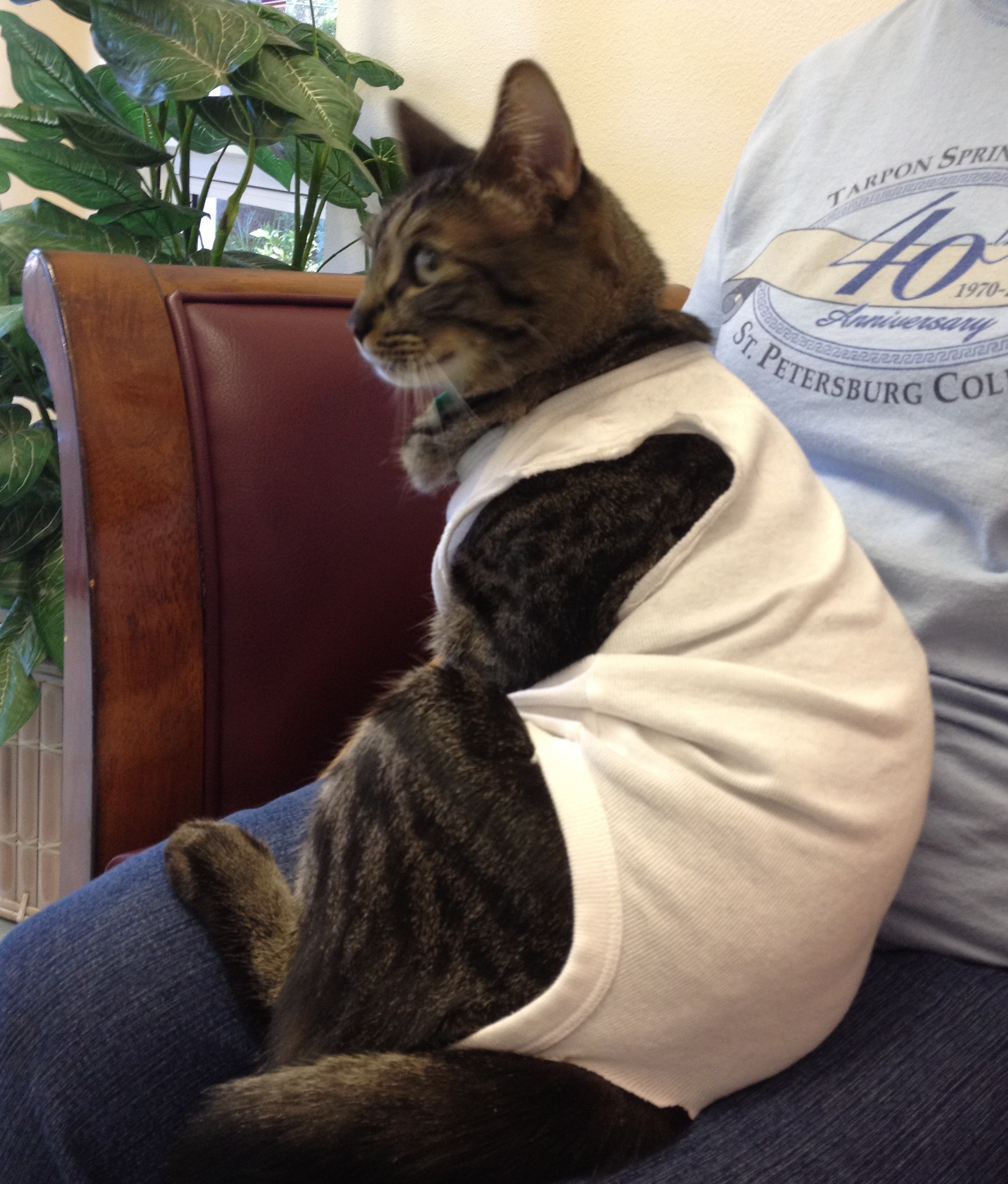 T Shirt To Stop Cats Licking After Surgery